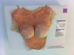 Fake breasts in the museum of broken relationships in Zagreb, Croatia